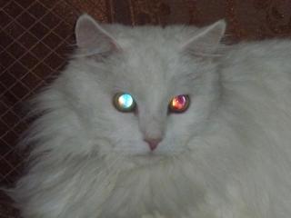 кошачьи глаза - 1