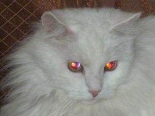 кошачьи глаза - 2