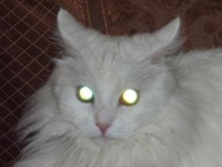кошачьи глаза - 3